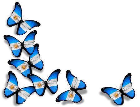flag of argentina: Mariposas argentinas bandera, aisladas sobre fondo blanco