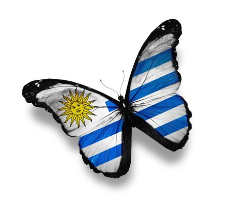 Uruguayan flag butterfly, isolated on white photo