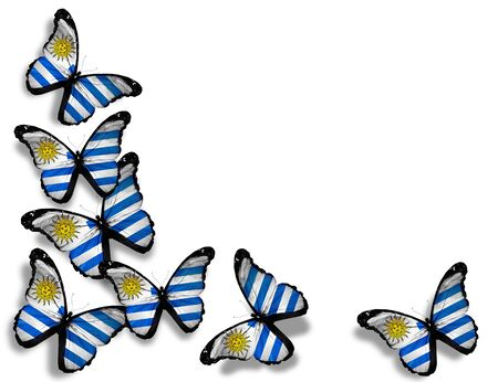 Uruguayan flag butterflies, isolated on white background photo