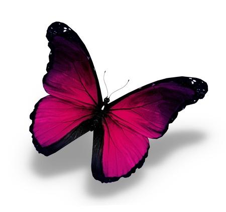 Morpho violette papillon, isolé sur blanc