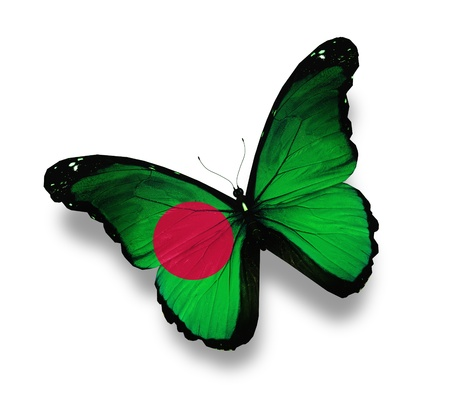 Bangladesh flag butterfly, isolated on white photo