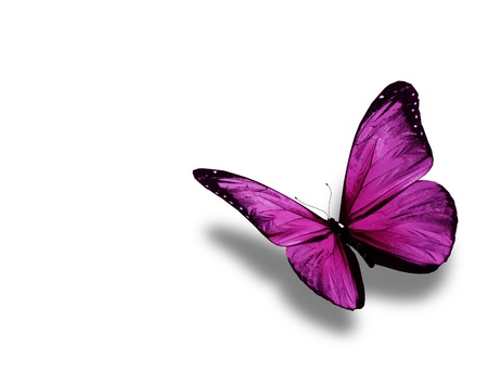 Violet butterfly, isolated on white background photo
