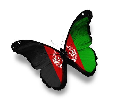 Afghani flag butterfly, isolated on white photo