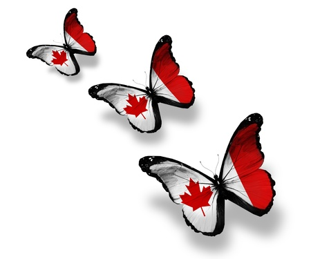 canada flag: Three Canadian flag butterflies, isolated on white Stock Photo