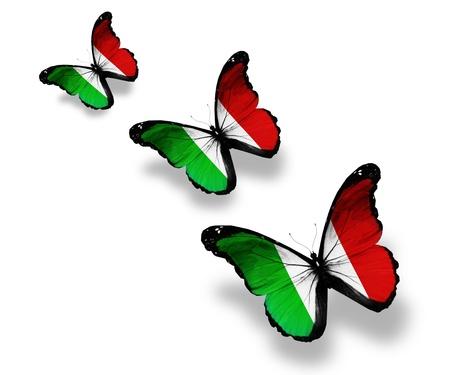 flagge auf land italien: Drei italienische Flagge Schmetterlinge, isoliert auf wei� Lizenzfreie Bilder