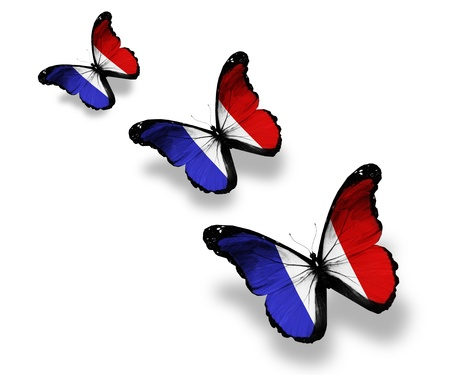 french: Three French flag butterflies, isolated on white