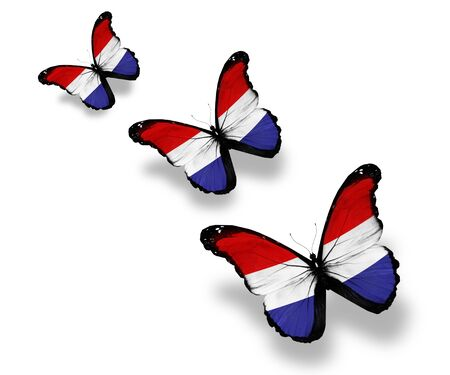 netherlandish: Three Netherlandish flag butterflies, isolated on white Stock Photo