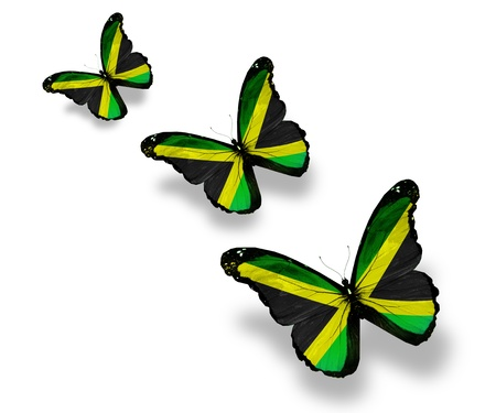 jamaican: Three Jamaican flag butterflies, isolated on white Stock Photo