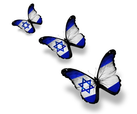 and israel: Three Israeli flag butterflies, isolated on white Stock Photo