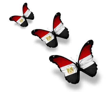 Three Egyptian flag butterflies, isolated on white photo
