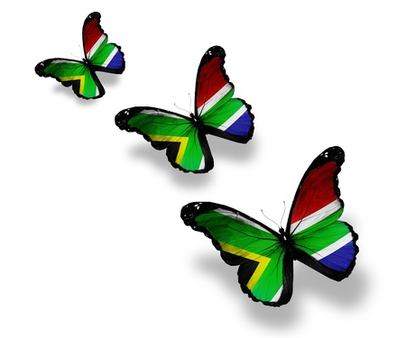 south african flag: Three South Africa flag butterflies, isolated on white