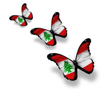 Three Lebanese flag butterflies, isolated on white photo