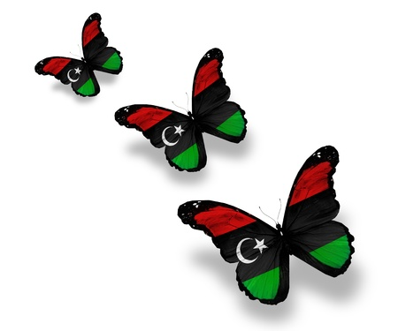 Three Libyan flag butterflies, isolated on white photo
