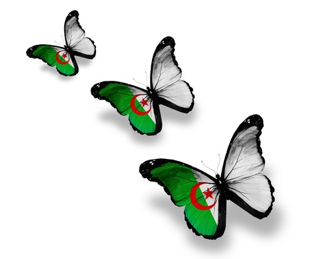 Three Algerian flag butterflies, isolated on white photo