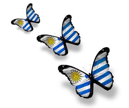 Three Uruguayan flag butterflies, isolated on white photo