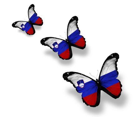 slovenian: Three Slovenian flag butterflies, isolated on white