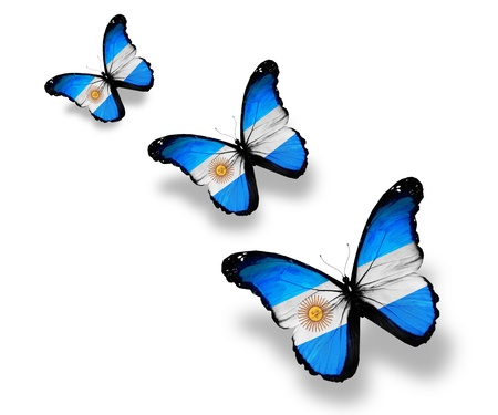 argentina flag: Three Argentine flag butterflies, isolated on white Stock Photo