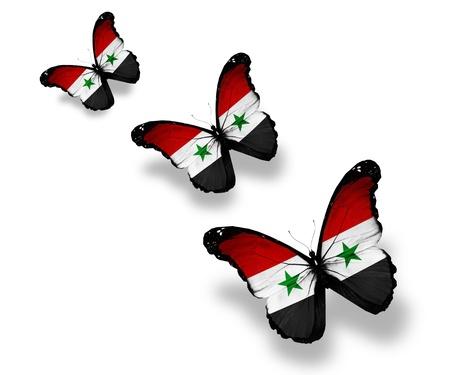 syria: Three Syrian flag butterflies, isolated on white Stock Photo