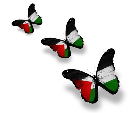 palestine: Three Palestinian flag butterflies, isolated on white Stock Photo