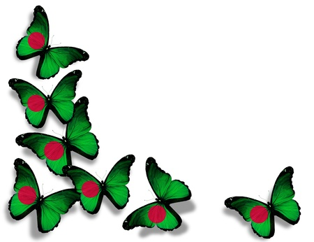 Bangladesh flag butterflies, isolated on white background photo