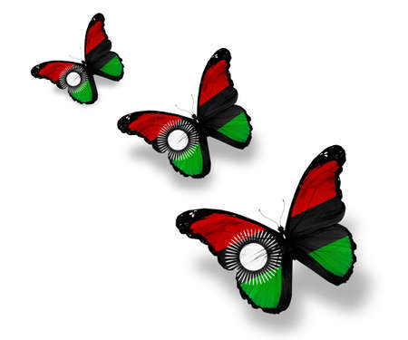 Three Malawi flag butterflies, isolated on white photo