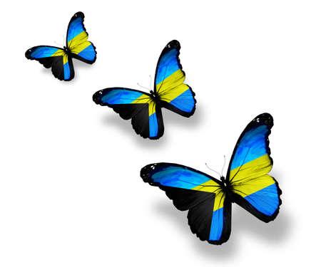 bahamas celebration: Three Bahamian flag butterflies, isolated on white