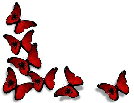 albanian: Albanian flag butterflies, isolated on white background Stock Photo