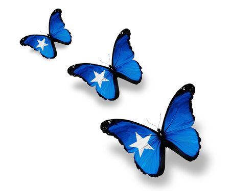 somalian: Three Somalian flag butterflies, isolated on white