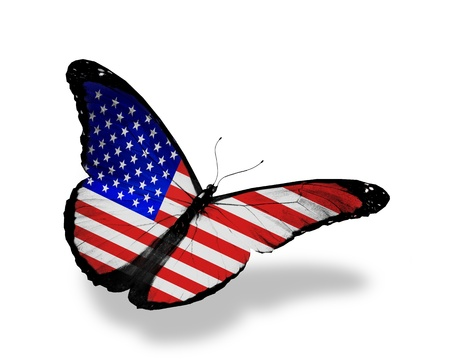american butterflies: American flag butterfly flying, isolated on white background