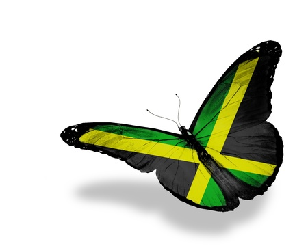 Jamaican flag butterfly flying, isolated on white background photo