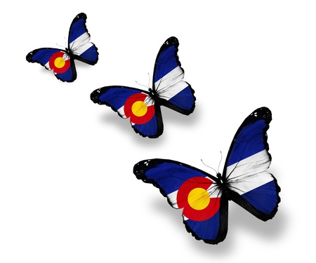 Three Colorado flag butterflies, isolated on white photo