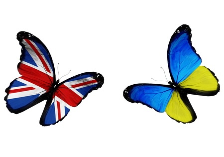Concept - two butterflies with Ukrainian and English flags flying, like two football teams playing   photo