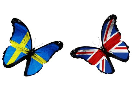 Concept - two butterflies with Swedish and English flags flying, like two football teams playing   photo