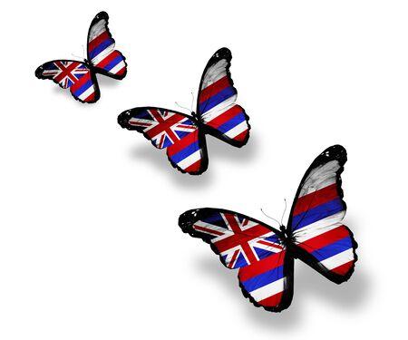 hawaii flag: Three Hawaii flag butterflies, isolated on white Stock Photo