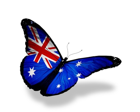 Australian flag butterfly flying, isolated on white background