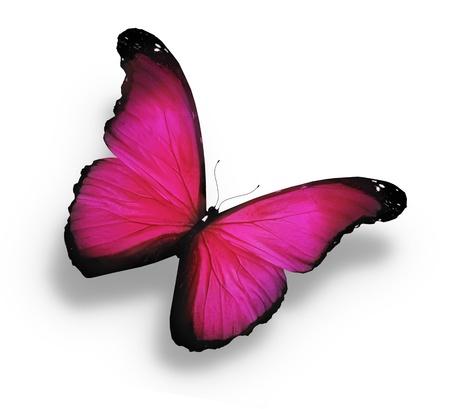 papillon rose: Morpho rose papillon, isolé sur blanc