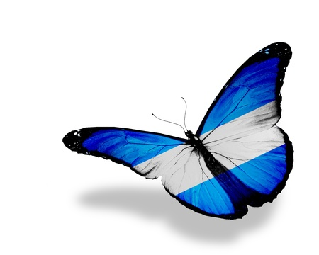 Argentine flag butterfly flying, isolated on white background photo