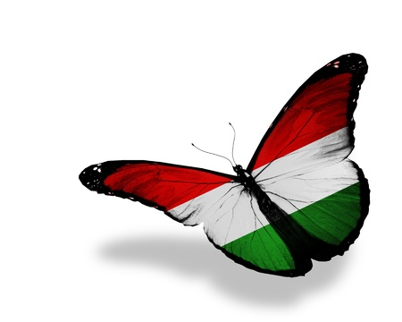 hungarian: Hungarian flag butterfly flying, isolated on white background