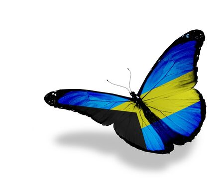 bahamian: Bahamian flag butterfly flying, isolated on white background