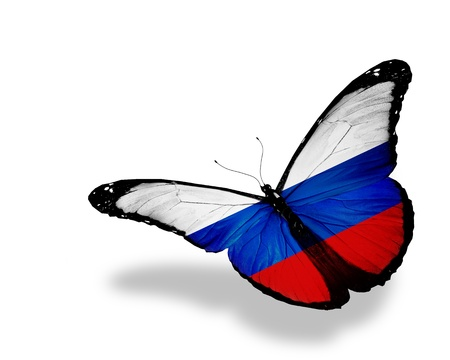 Russian flag butterfly flying, isolated on white background photo