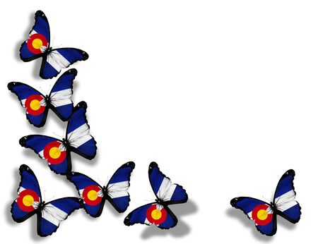 colorado flag: Colorado flag butterflies, isolated on white background