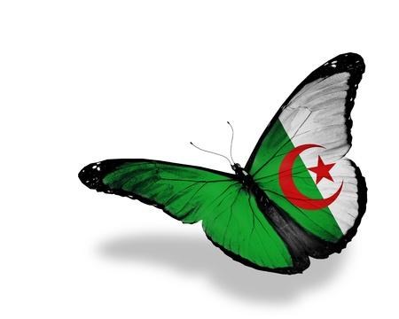 Algeria: Algerian flag butterfly flying, isolated on white background