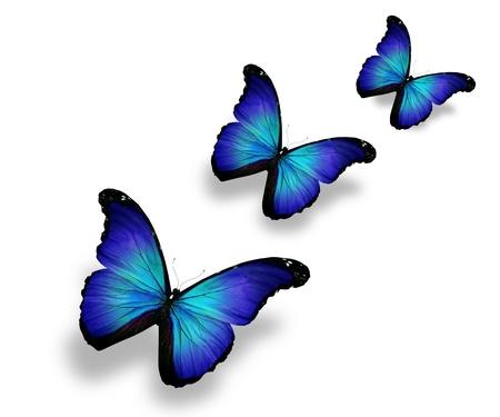 butterflies flying: Tre farfalle blu, isolati su bianco