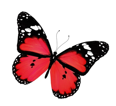 Red butterfly flying, isolated on white photo