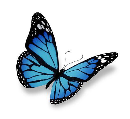 mariposas volando: Mariposa azul, aislados en fondo blanco