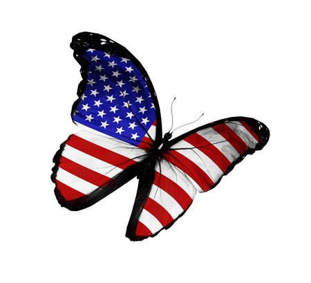 black and blue butterfly flying: American flag butterfly flying, isolated on white background