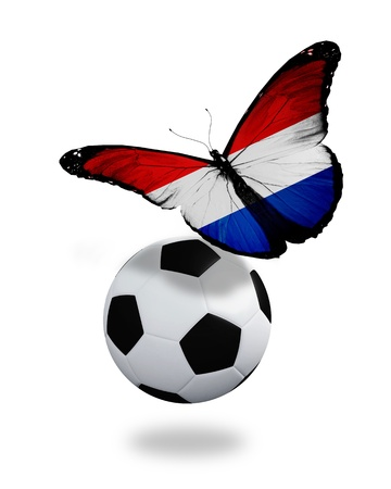 Concept - butterfly with Netherlandish flag flying near the ball, like football team playing   photo