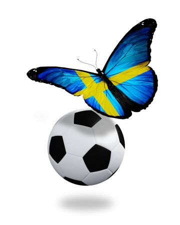 Concept - butterfly with Swedish flag flying near the ball, like football team playing   photo