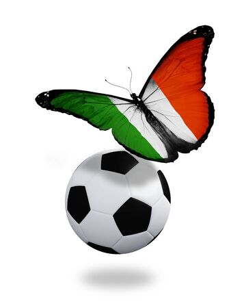 Concept - butterfly with Irish flag flying near the ball, like football team playing   photo