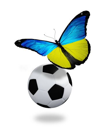 ball like: Concept - butterfly with ukrainian flag flying near the ball, like football team playing   Stock Photo